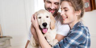 Bedste hundeforsikring